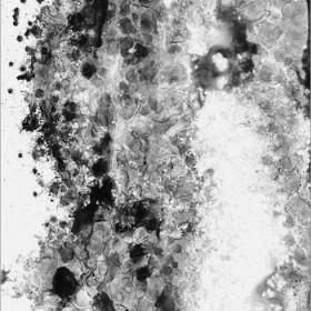 [ spyglass #2 ]   Feb.2008 H785*W555mm 額装